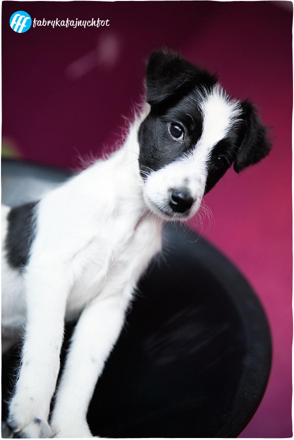 zdjęcia psa