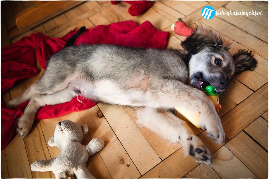 sesja fotograficzna dla psa
