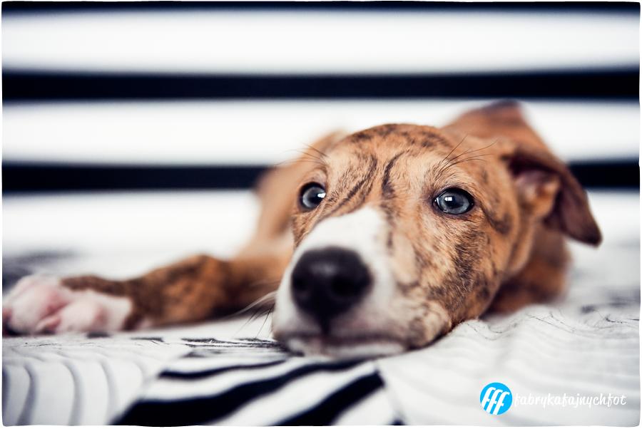 sesja fotograficzna dla hodowców psów