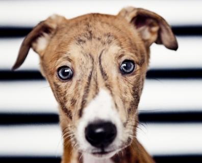 frankie – sesja dla psa